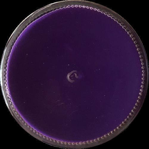 Schoencrème Violet - Schoensmeer Violet - Shoe Cream Violet